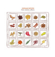 colored sketch indian spices set vector image vector image