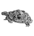 common tortoise engraving vintage vector image