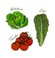 hand drawn sketch style vegetables set butterhead vector image vector image