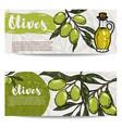 set of olive oil flyers olive branch design vector image vector image