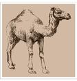 Camel vintage sketch vector image vector image