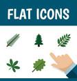 flat icon ecology set of park alder acacia leaf vector image vector image