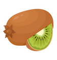 kiwi fresh ripe and juicy chinese gooseberry vector image vector image