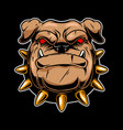 angry bulldog head design element for logo label vector image