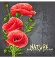 Background for your text with red poppies vector image vector image