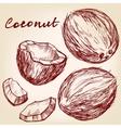 coconut set hand drawn sketch vector image