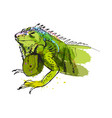 colored hand sketch of iguana vector image vector image