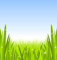 Morning grass copyspace vector image