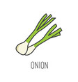 onion line cooking isolated vector image vector image