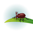 cartoon rhino beetle on leaf vector image