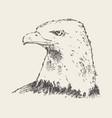 eagle looking into distance drawn sketch vector image