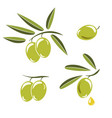icon of olives branch with green olives and vector image