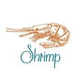 Marine shrimp or prawn sketch in engraving style vector image
