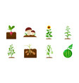 plant vegetable icons in set collection for vector image