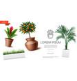 realistic houseplants template vector image vector image