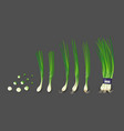 spring onions and spring onions shredded vector image vector image