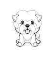 dog affenpinscher sitting flat design lovely vector image