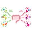 poster of intestinal flora gut health vector image