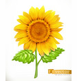 sunflower 3d icon vector image