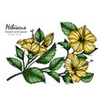 yellow hibiscus flower and leaf drawing with line vector image