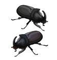 Black beetle rhinoceros on white background vector image vector image