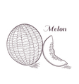 Engaved melon vector image
