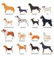 profile dogs icon set vector image vector image