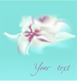 Spring background with abstract white flower vector image vector image