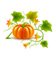 Growing pumpkin plant isolated on white