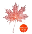 Hand drawn maple leaf vector image