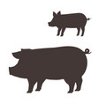 silhouette pig on white background vector image vector image