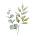 watercolor arrangement green branches vector image vector image
