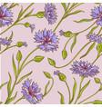 cornflower pattern vector image