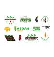 set garden organic vegetable and vegan labels vector image vector image