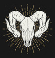 ram skull design element for poster t shirt vector image
