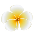 A fresh flower vector image vector image