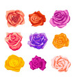 large set bright beautiful rosebuds in vector image