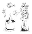 Sketch of blossoming hyacinth hand drawing with vector image vector image