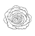 beautiful black and white rose isolated on vector image