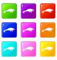 chameleon icons 9 set vector image vector image