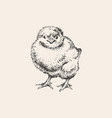 chick hand drawn sketch cute vector image vector image
