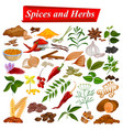 full collection of aromatic spices and herbs used vector image