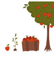 gardening set - tree with apples sprout in ground vector image