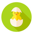 Hatched Chicken in Eggshell Circle Icon vector image