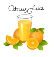 Orange juice with fruit slice Composition vector image vector image