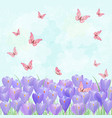 field of blooming crocus with flying butterflies vector image vector image