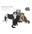 Dogs by country of origin romanian dog breeds vector image
