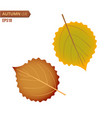 autumn birch leaf isolated on a white background vector image vector image