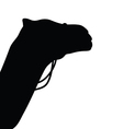 camel silhouette in black vector image