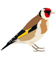goldfinch bird isolated object vector image vector image